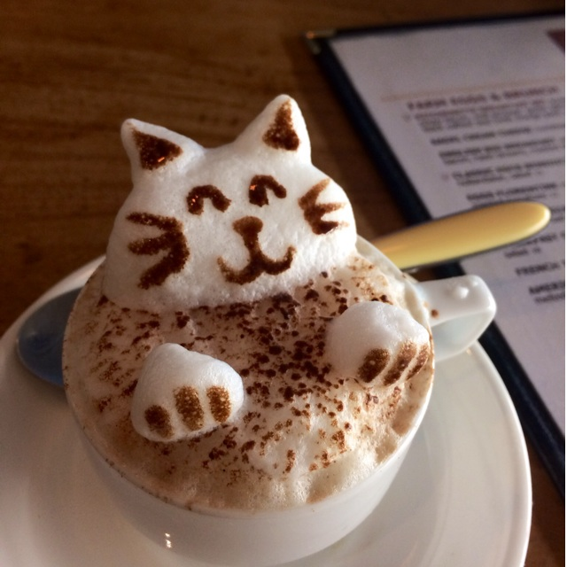 Cat Coffee Drink